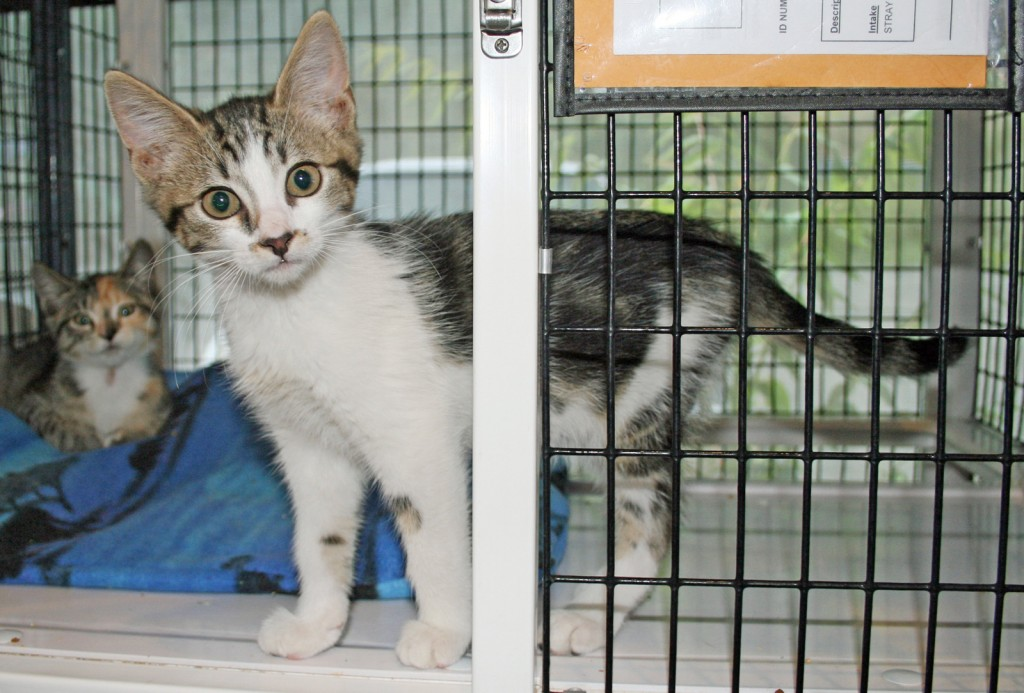 HOW CAN YOU RESIST? If you're thinking about adopting a kitty head over to the Animal Services shelter.