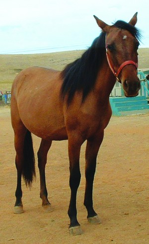 Peanut was the second Whispering Pines horse rescued by the Grace Foundation that died because of her poor health.