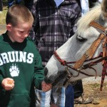 Sam Beezley, 6, from El Dorado Hills gives a carrot to a Pony Express horse. Village Life photo by Pat Dollins