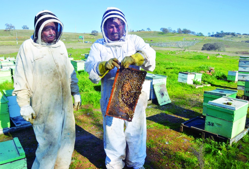 "New Clarksville residents —€"" Bryan Williams, right, of High Sierra Bee Ranch and his father Dave show off their bees. They'€™ve got a couple hundred hives spending the winter in the old ghost town of Clarksville. The hives are all headed to almond orchards later this spring."