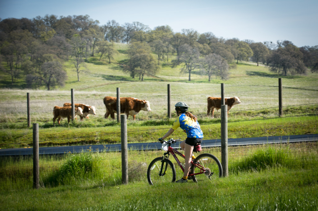 "Local riders enjoyed scenic views along their path during the ""Race Behind Bars"" in Folsom earlier this month. Photo by Vince Tarry"
